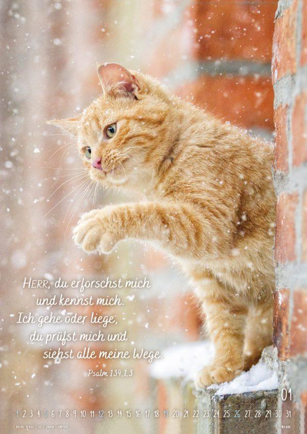 Mein Katzenkalender 2020 Posterkalender