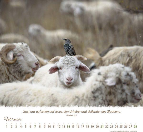 179618021 02 1 600x554 - Ein Leben für die Schafe 2021 Tischkalender