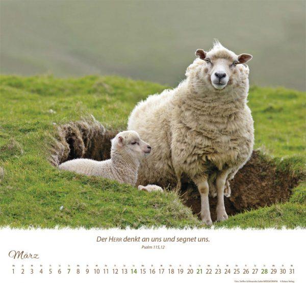 179618021 03 600x554 - Ein Leben für die Schafe 2021 Wandkalender