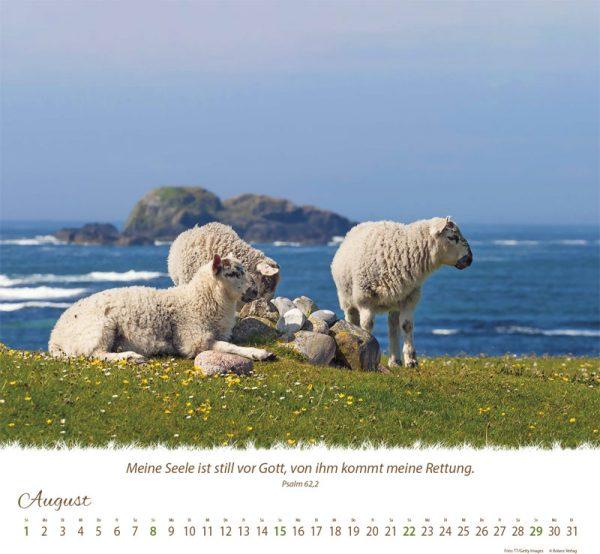 179618021 08 600x554 - Ein Leben für die Schafe 2021 Wandkalender