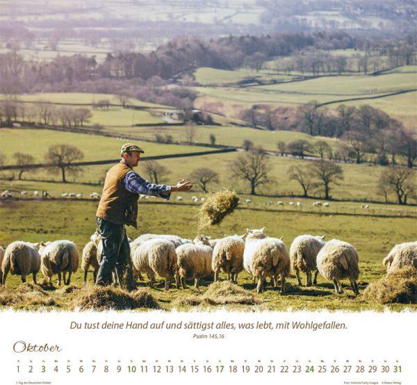 179618021 10 600x554 - Ein Leben für die Schafe 2021 Wandkalender