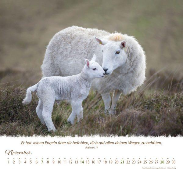 179618021 11 1 600x554 - Ein Leben für die Schafe 2021 Tischkalender