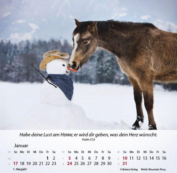 179625021 01 600x584 - Pferde 2021 Tischkalender