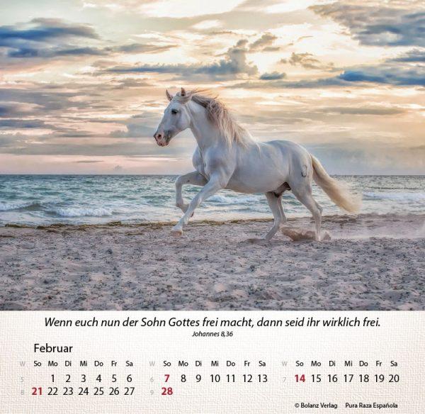 179625021 02 600x584 - Pferde 2021 Tischkalender
