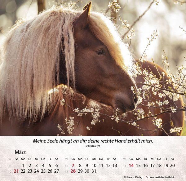 179625021 03 600x584 - Pferde 2021 Tischkalender