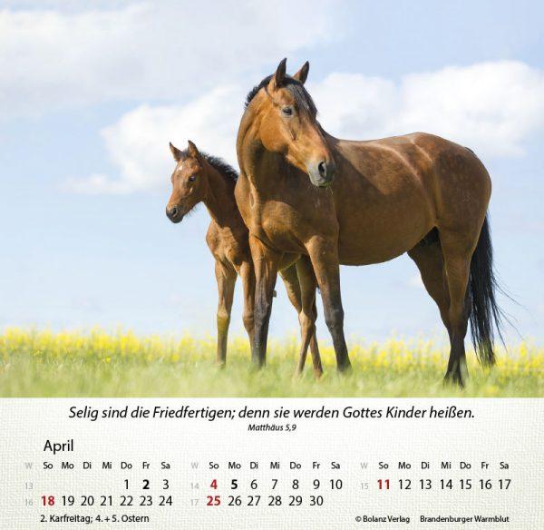 179625021 04 600x584 - Pferde 2021 Tischkalender