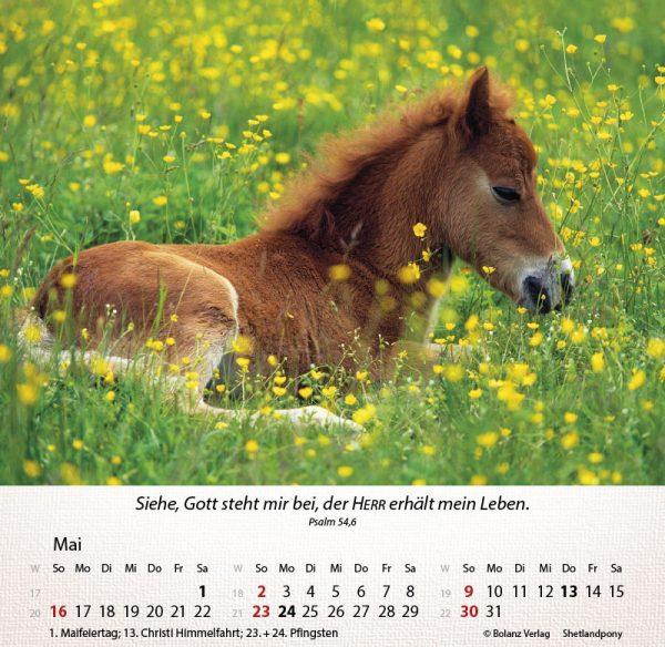 179625021 05 600x584 - Pferde 2021 Tischkalender