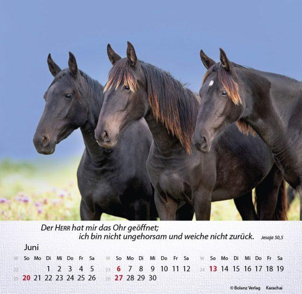 179625021 06 600x584 - Pferde 2021 Tischkalender