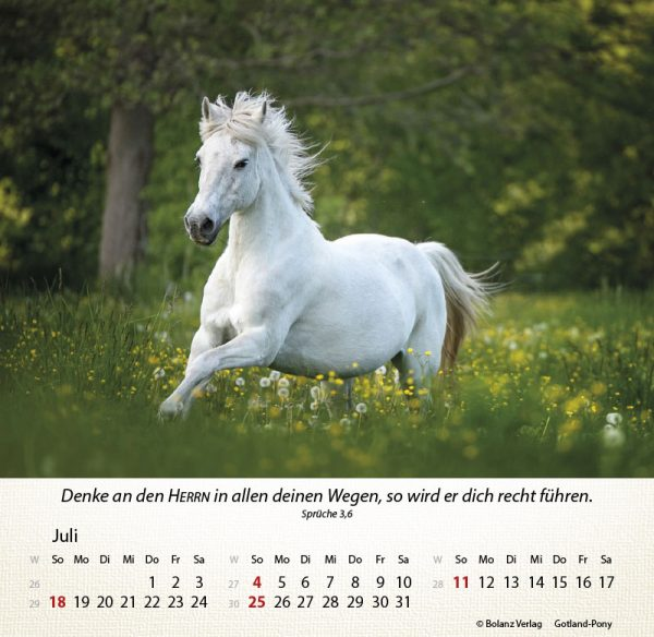 179625021 07 600x584 - Pferde 2021 Tischkalender