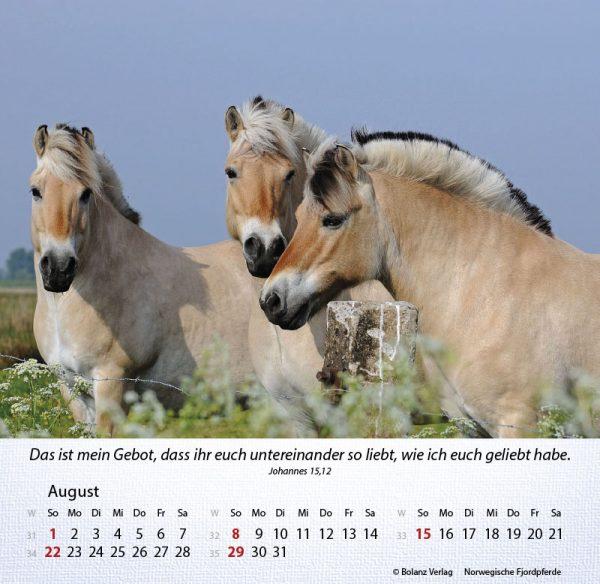 179625021 08 600x584 - Pferde 2021 Tischkalender