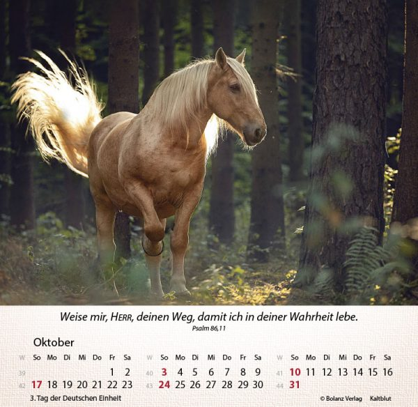 179625021 10 600x584 - Pferde 2021 Tischkalender