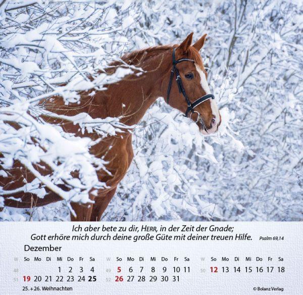 179625021 12 600x584 - Pferde 2021 Tischkalender